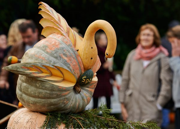 Impressions from Pumkin Festival